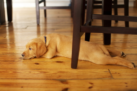 3 Low Cost Pet Odor Removal Options For Hardwood Floors