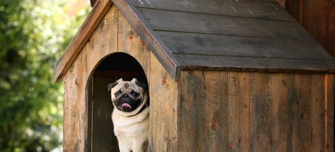 How To Waterproof Your Dog House Doityourself Com