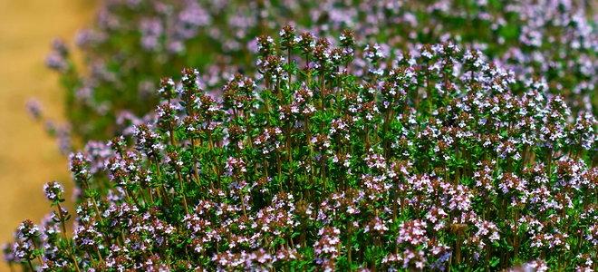 grow an edible landscape doityourself com
