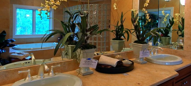Create A Tropical Themed Bathroom With Plants That Love Humidity