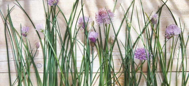 Chives with purple flowers on a wood background.