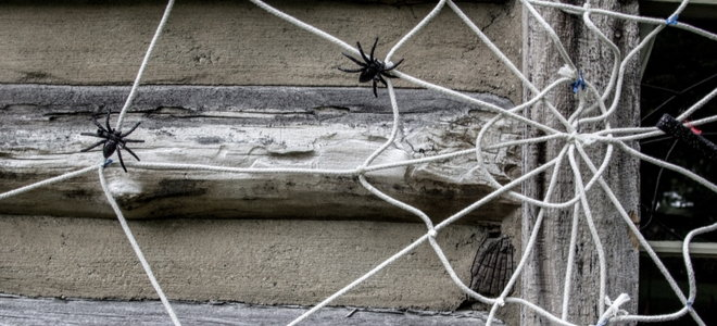 strict spider web with spiders