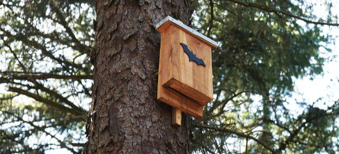 bat box on a tree for pest control