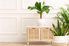 three houseplants in a clean, white room