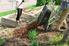 Adding mulch to plants