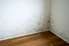 mildew in the corner of a room with white walls and wood floor