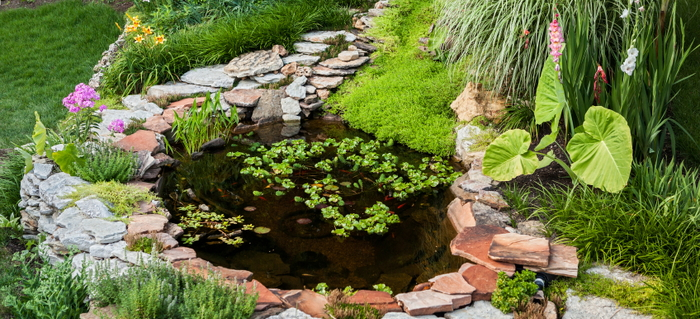 How to Have a Pond without Having Mosquitoes | DoItYourself.com Greenhouse Design Small Pond on small lawn ponds, small plant ponds, small yard ponds, small fish ponds, small indoor ponds, small farm ponds,