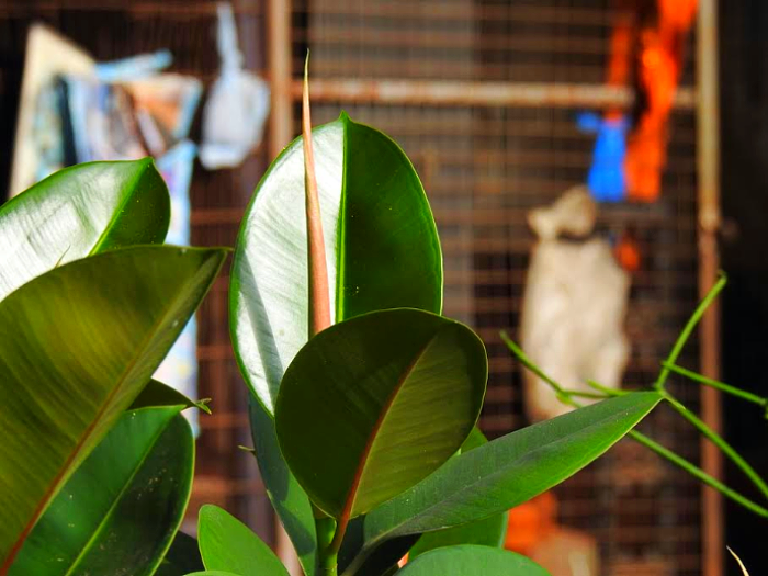 Be sure your plants have the right temperature