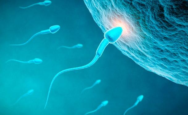 Sperm donation 33525