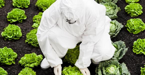 28_GMOs.jpg