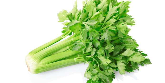 Celery_000017222950_Small.jpg