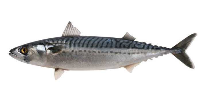 the nutrition of mackerel nutrition healthy eating