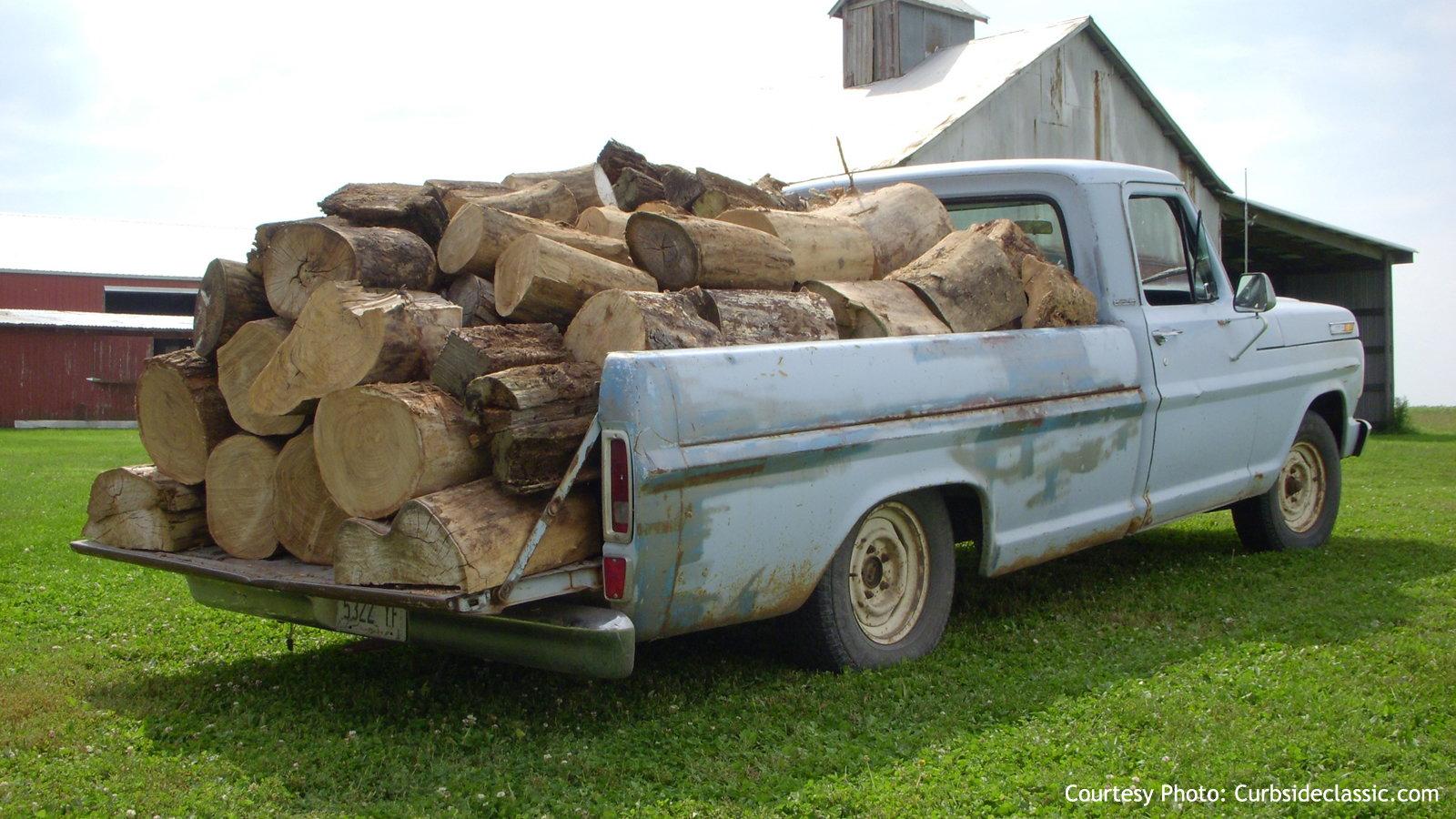 Lots of Tree Logs