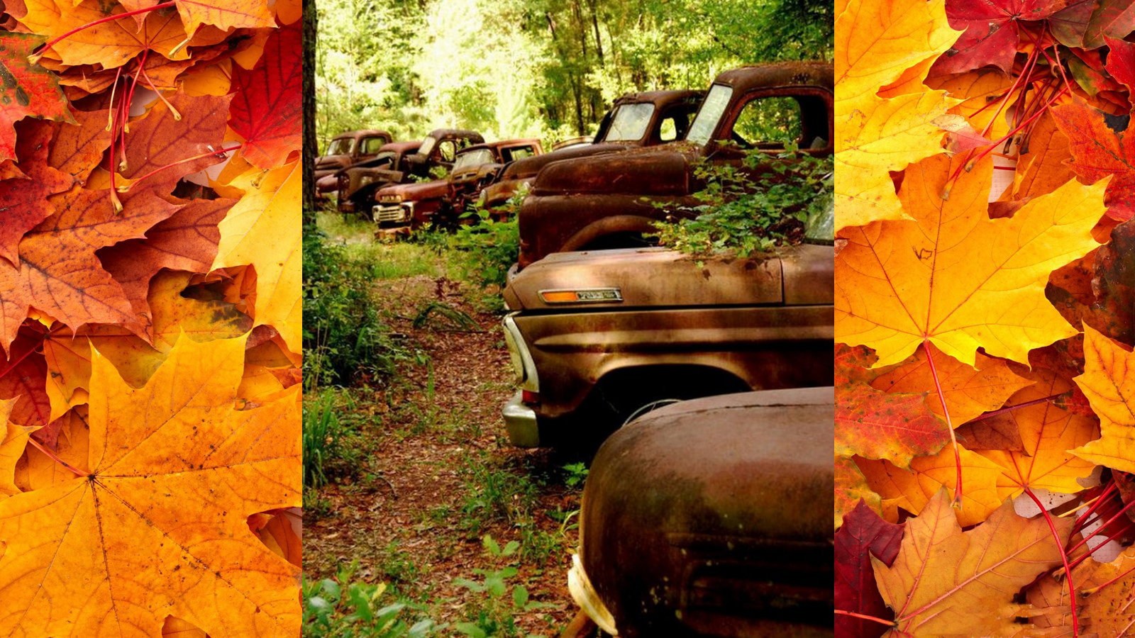 10 Ford Trucks Basking in Fall Leaves