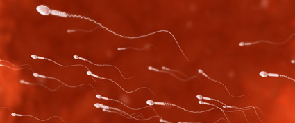 An image of swimming sperm.