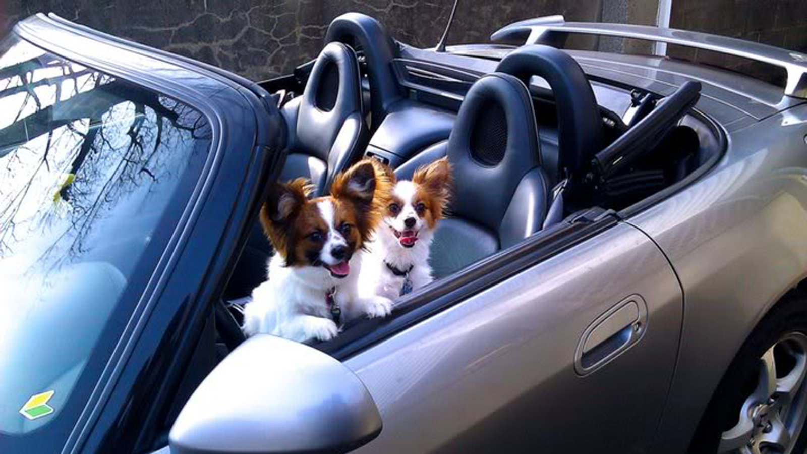 Dogs, Riding in cars, K-9