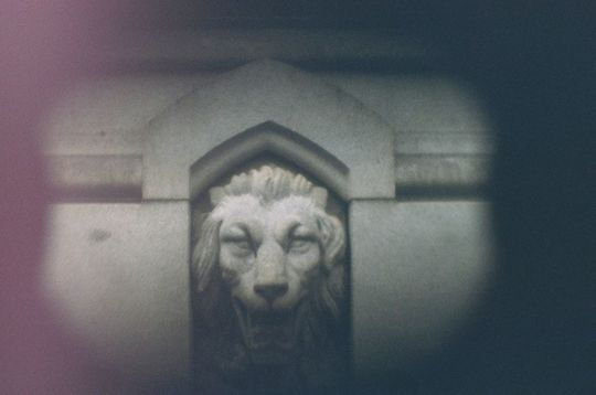 SLO-camera_lion amos dudley.jpg