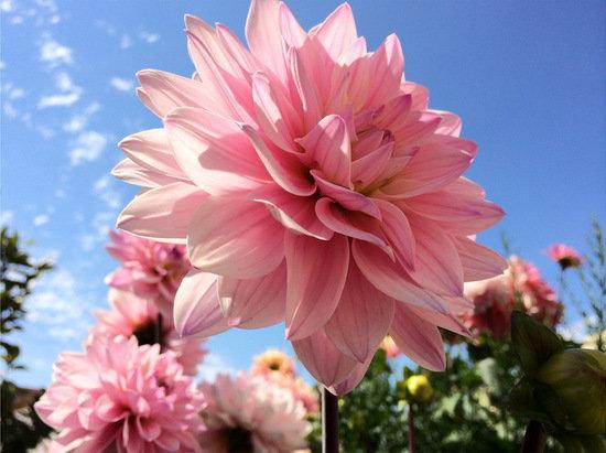 iPhone_5S_sample_flower.jpg