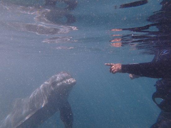 DolphinHandSignals.jpg