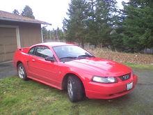 Happy Mustang!!