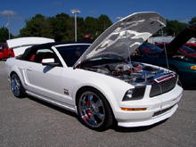 NEW MUSTANG PIC 08