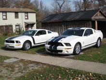 father and son Mustangs
