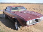 1968 Firebird  for sale $6,000