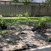 Texas Clay Bog- year I