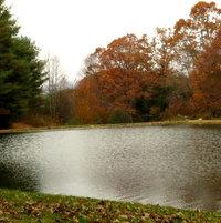 Catfish Pond near the cabin ..