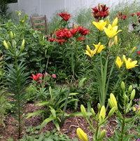 Perennials 2015