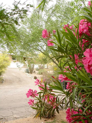 Spring desert in bloom.