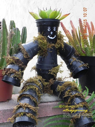 His Royal Highness, King Pots, sits atop a wall, flanked by potted Stapelias.
