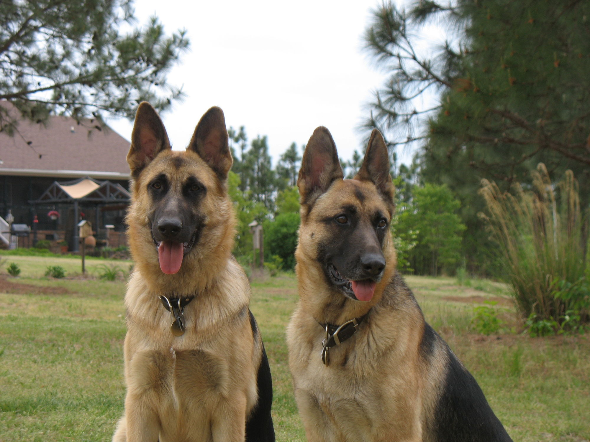Sandhills Dog Rescue