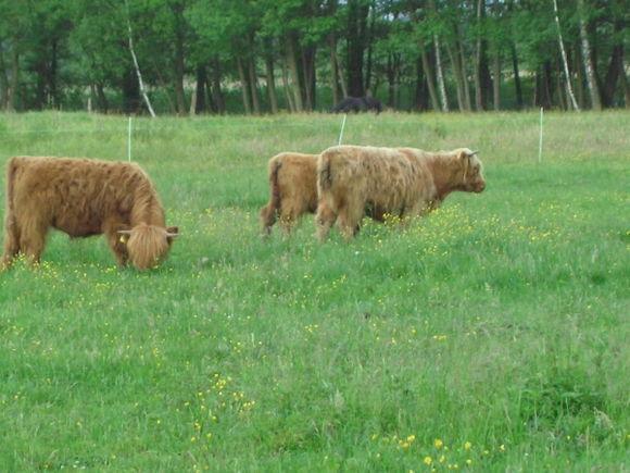 Scottish Highlands...