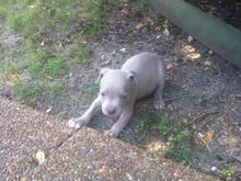 cashmoney pup