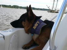 NavyDog