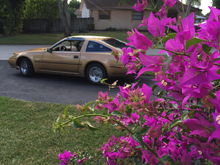 Artsy plant with the gold Z31