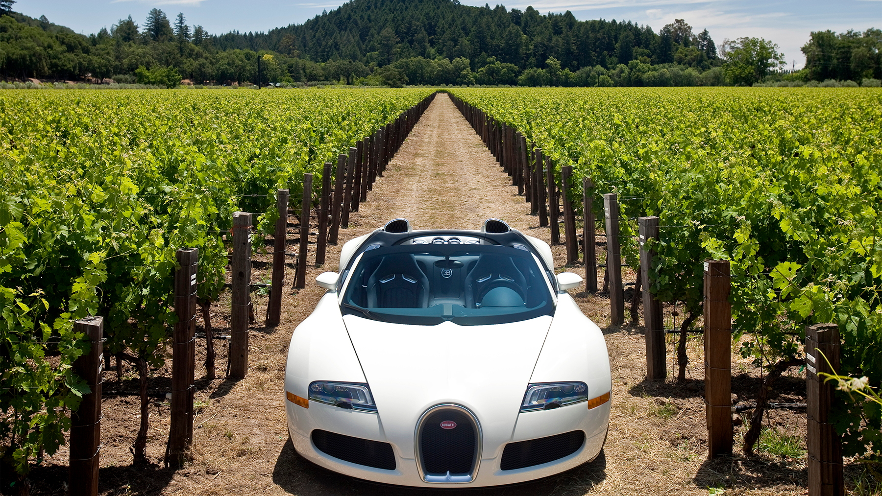 bugatti veyron grand sport napa valley 013
