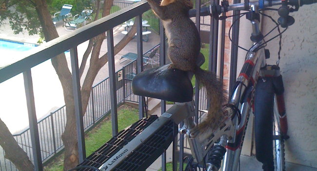 naughty squirrels in my balcony